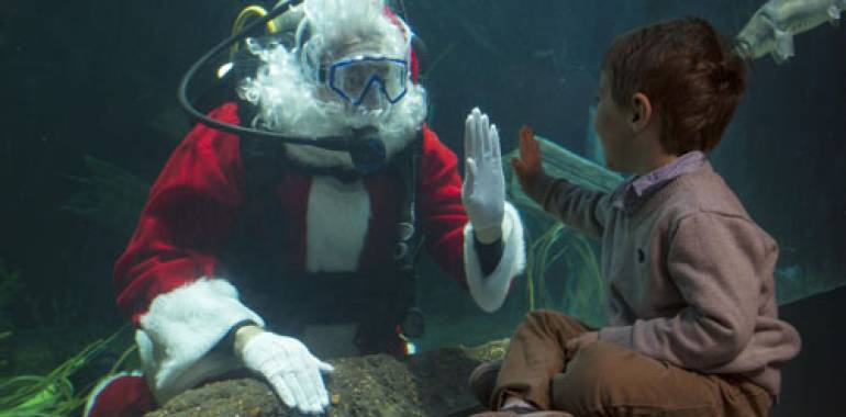 Holidays at the Tennessee Aquarium!