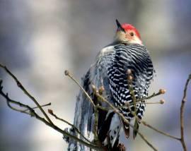 Winter Bird Walk-January 16, 2019-Pickett Memorial State Park