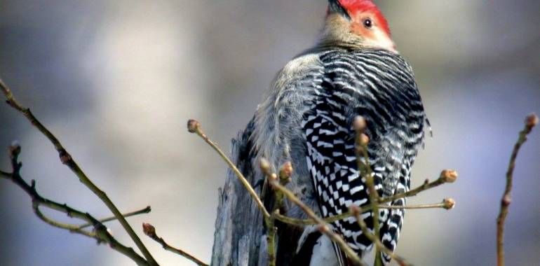 Winter Bird Walk-January 16, 2019-Pickett Memorial State Park