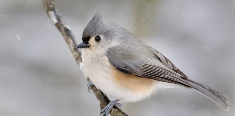 Winter Bird Count at Fall Creek Falls State Park-February 29, 2020